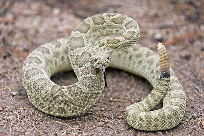 See How Much A US Hospital Charges To Treat A Rattlesnake Bite