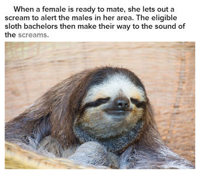 5 sloth facts