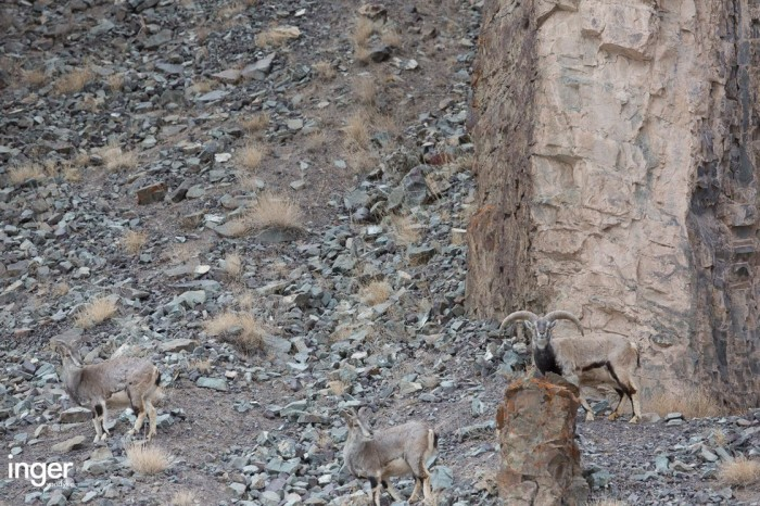 Can You Find The Leopard In This Picture? (5 pics)