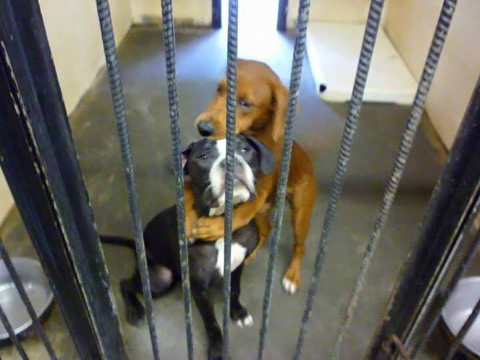 Photo Of Two Shelter Dogs Hugging Saves Them Both From Euthanasia (2 pics)