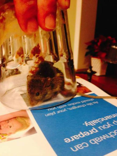 The Simplest And Safest Way To Catch A Mouse (3 pics)