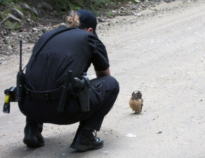 Rebellious Owl Gets Confronted By Police After Jaywalking (3 pics)