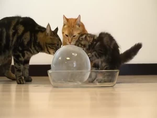 Cats And Ice