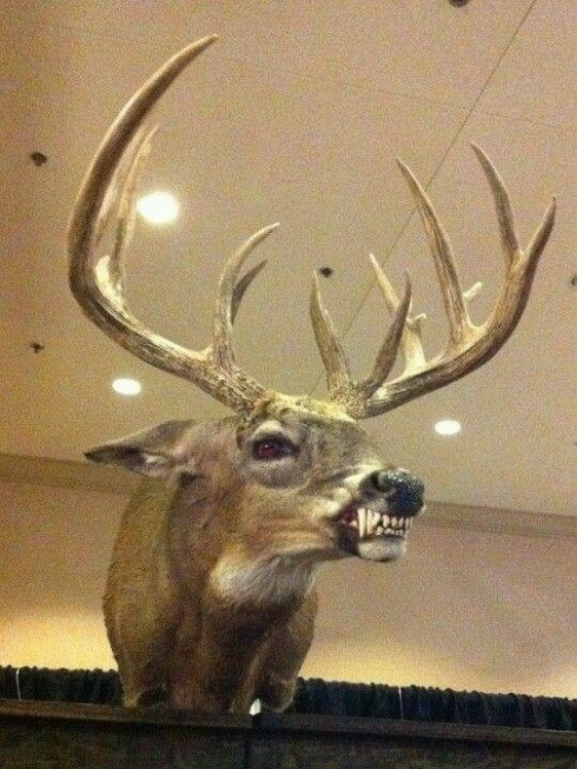Taxidermied Animals That Will Make You Say WTF? (30 pics)