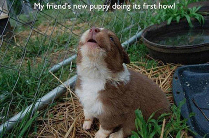 Animals Experiencing Things For The First Time Is Absolutely Adorable (20 pics)