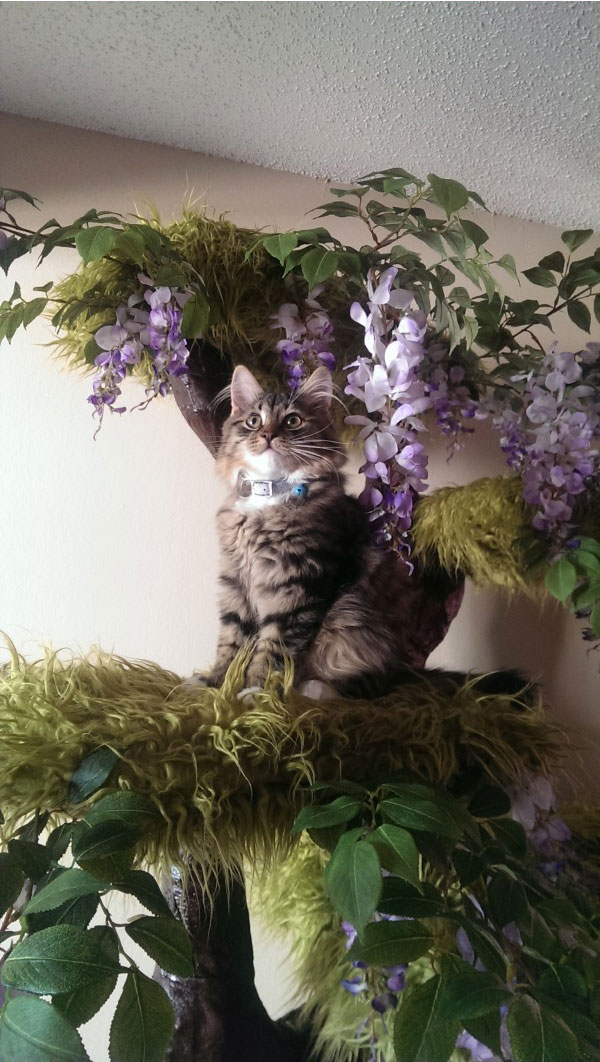 Cat Gets The Coolest Custom Creation (23 pics)