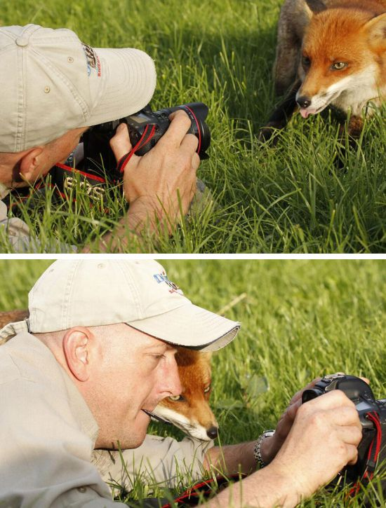 Animals That Wish They Could Be Photographers (20 pics)