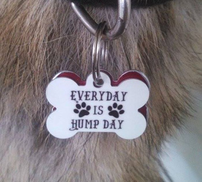 Custom Collar Tags Created By Pet Owners With A Good Sense Of Humor (14 pics)