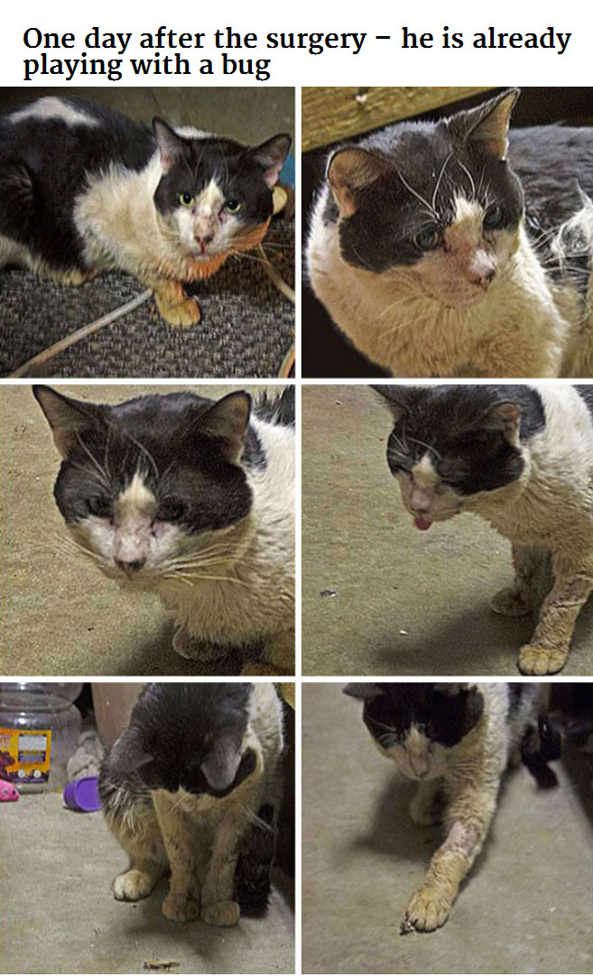 Generous Person Spends $1,000 To Change A Stray Cats Life (8 pics)