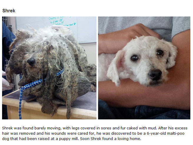 16 Before And After Photos Of Rescue Dogs Show Incredible Transformations (16 pics)