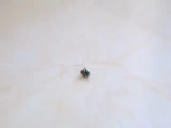 Fly Breakdancing