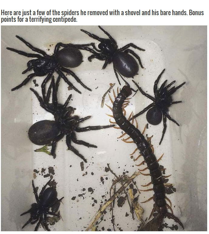 These Spiders Are A Good Reason To Stay Out Of Australia (5 pics)