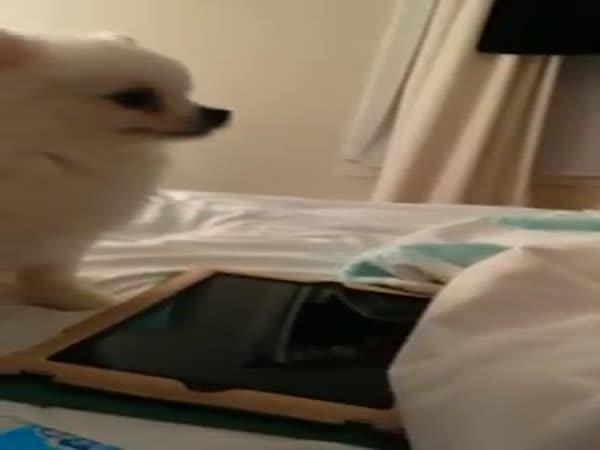 Dog Sneezes