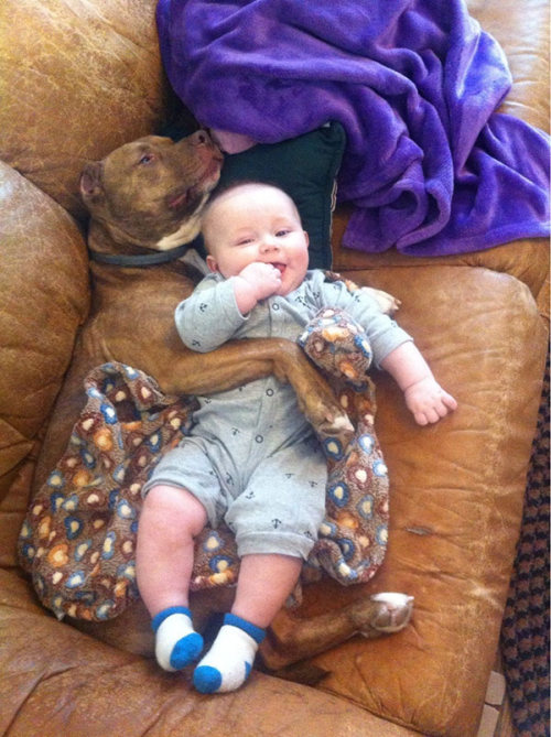 Dogs Truly Are The Most Loyal Pets In The World (28 pics)