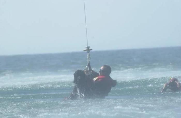 Rescue Dog Becomes A Member Of The Newfoundland Coast Guard Team (12 pics)
