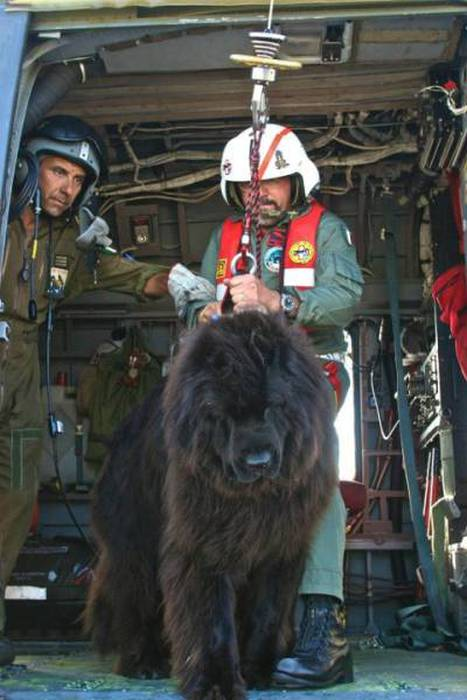 Rescue Dog Becomes A Member Of The Newfoundland Coast Guard Team (12 pics)