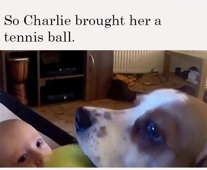 Charlie The Beagle Tries To Stop A Child From Crying (6 pics)