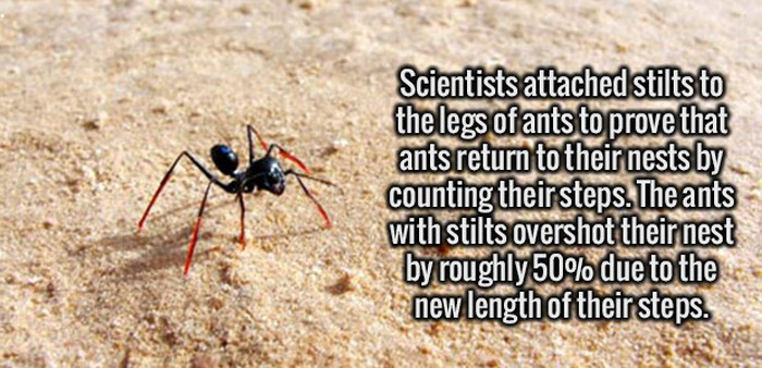 Give Your Brain A Healthy Serving Of Fun Facts (25 pics)