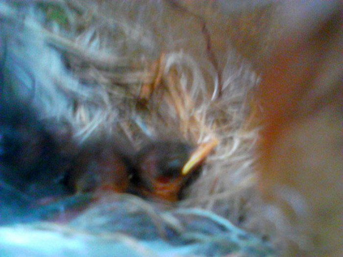 Bird Builds Its Nest In The Perfect Hiding Spot (9 pics)
