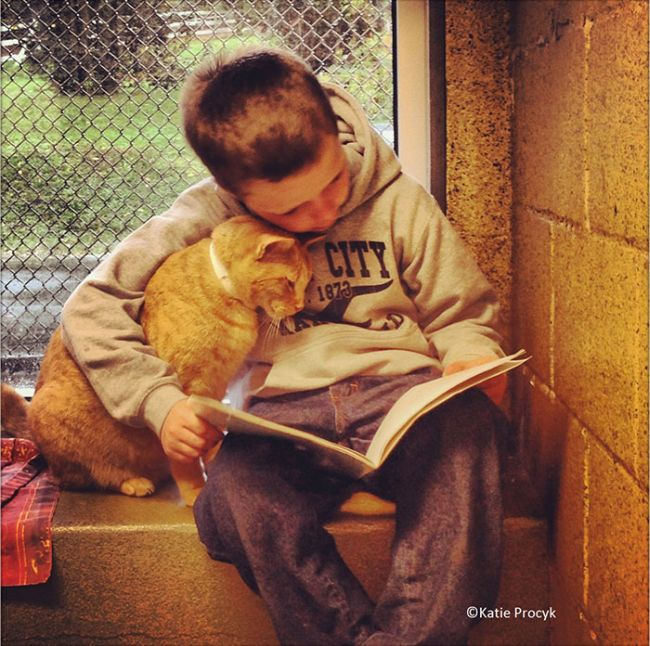 Kindhearted Woman Hangs Out At The Shelter And Reads Books To Lonely Dogs (2 pics)