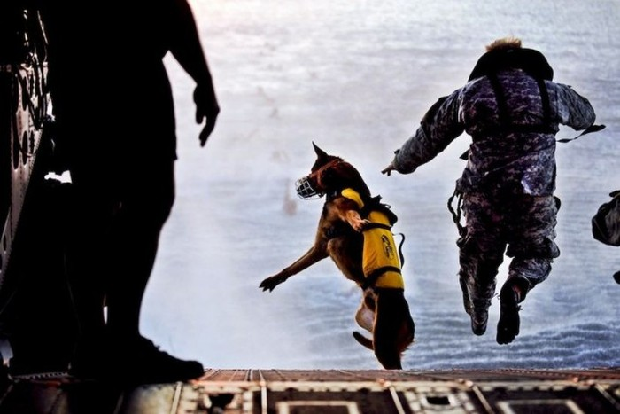 Perfectly Timed Military Photos (46 pics)