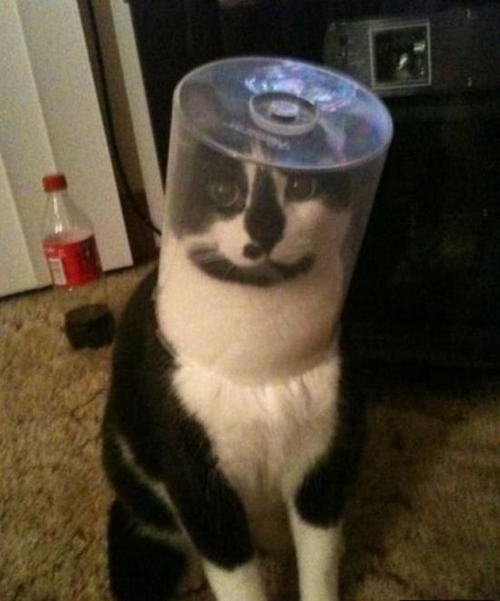 Silly Cat Pictures You Have To See To Believe (21 pics)