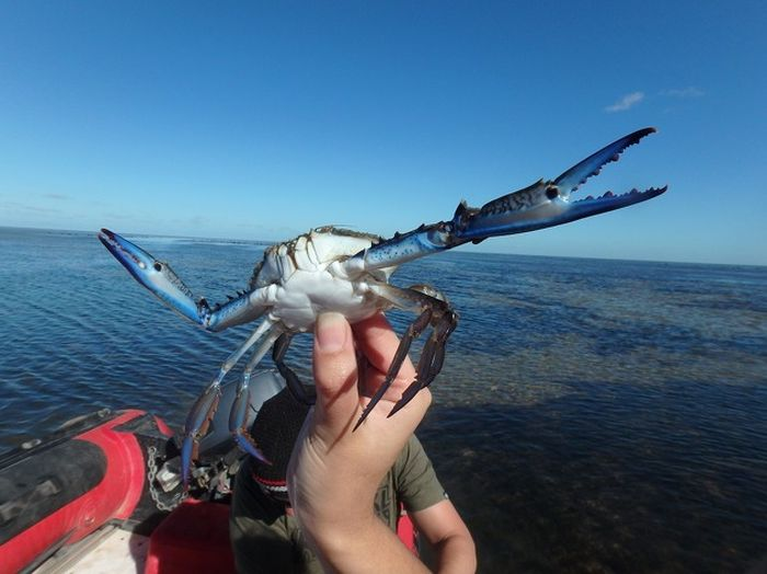 This Photoshopped Crab Is The Newest Internet Sensation (15 pics)