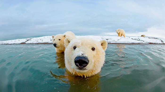 A Tribute To The Majestic Animals Of This World (33 pics)