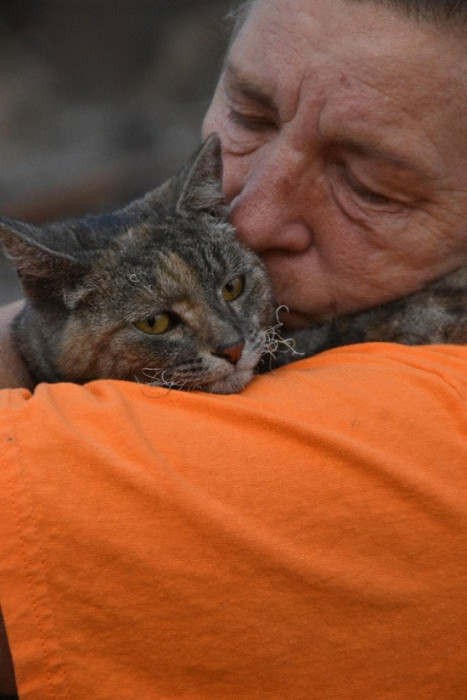 Miracle Cat Comes Home After House Burns Down (4 pics)