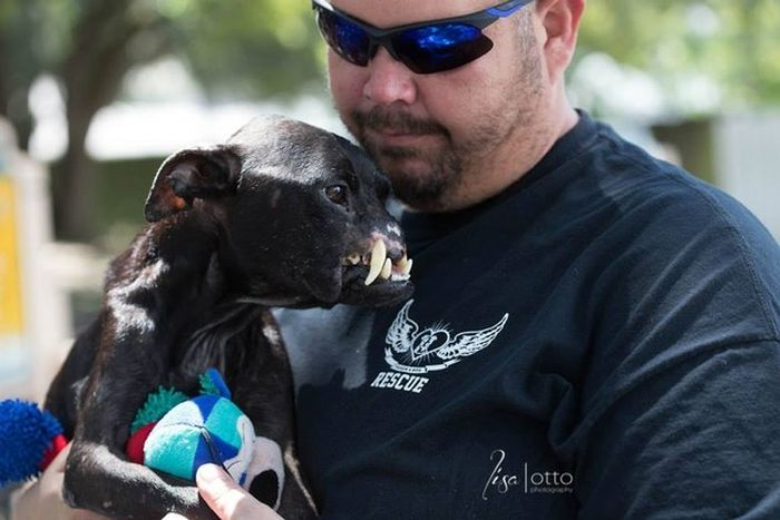 This Abused Pit Bull But Comes With A Whole Lot Of Love (6 pics)