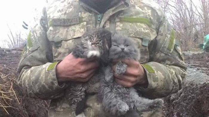Soldiers Spend A Little Time Cuddling With Cats (31 pics)