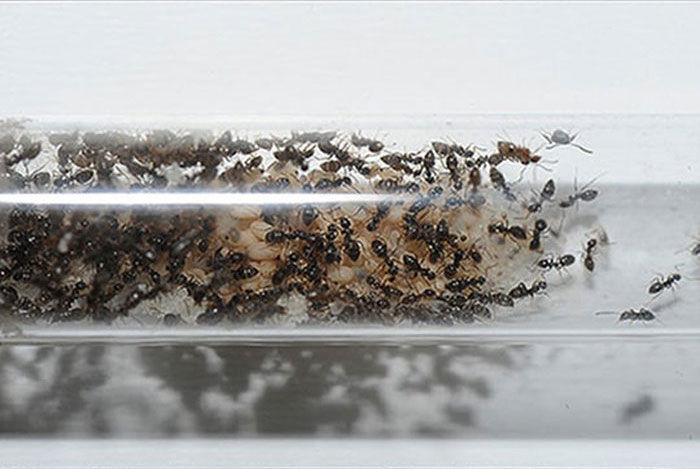 How To Create Your Own Ant Colony (13 pics)