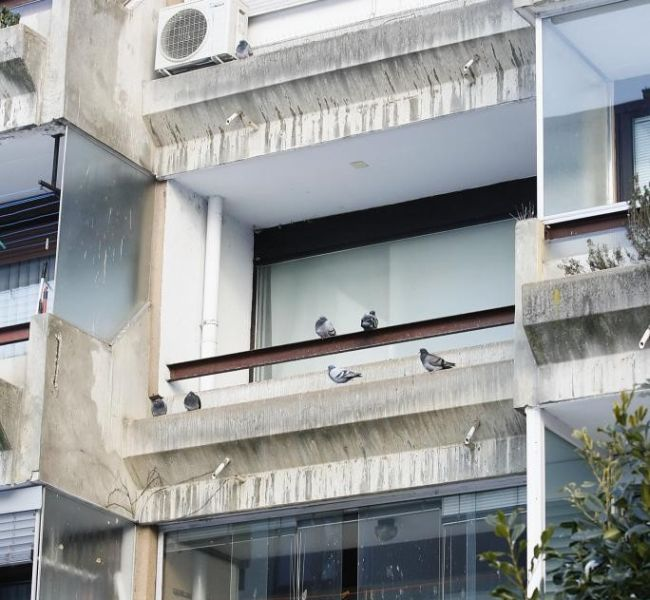 This Is What Happens When You Let Pigeons Live In Your Apartment (8 pics)