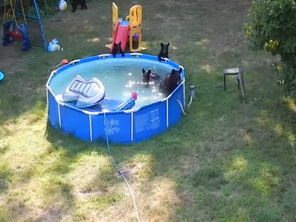 Bears In The Pool