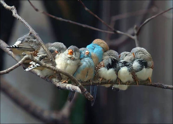 Birds Cuddle Up to Stay Warm (22 pics)