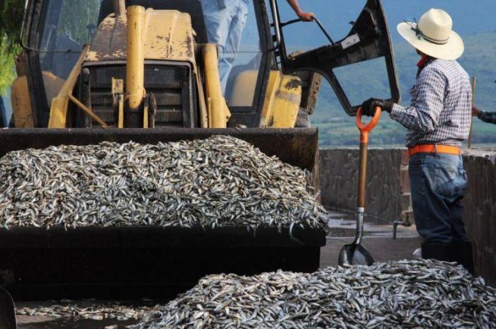 Fishermen Discover 40 Tons Of Dead Fish (19 pics)
