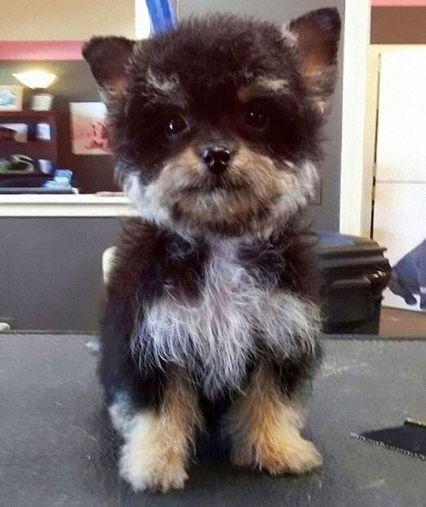Crossbreed Dogs  (38 pics)