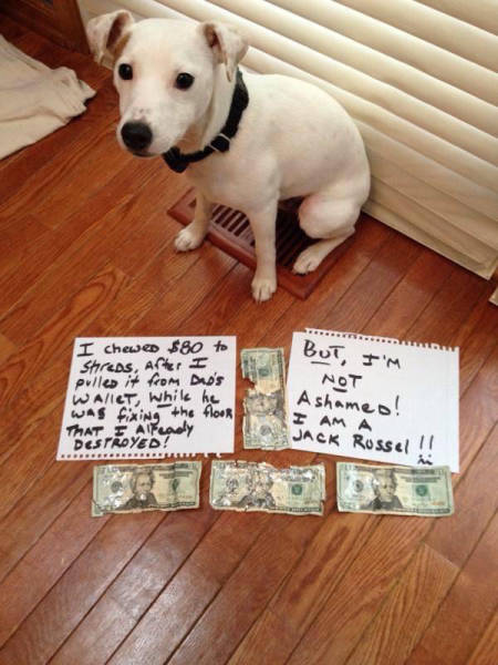 Dog Shaming (33 pics)