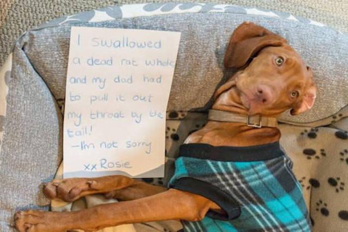 Dog Shaming (33 pics)
