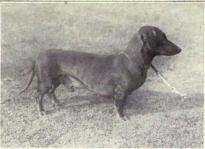 How Dogs Have Evolved Over The Last 100 Years (23 pics)