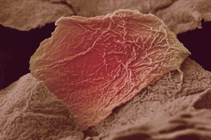 Microscopic Photos Of Human Body Parts (18 pics)