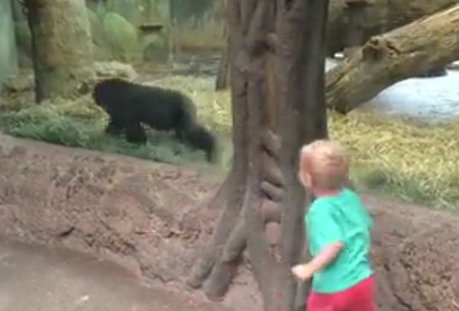 Toddler Playing Gorilla Toddler