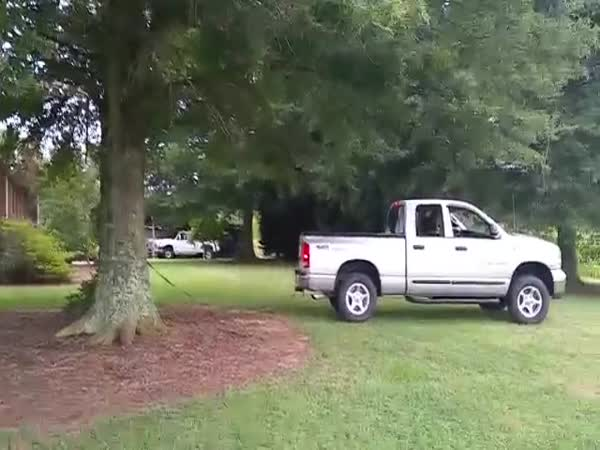 Pickup Vs Tree