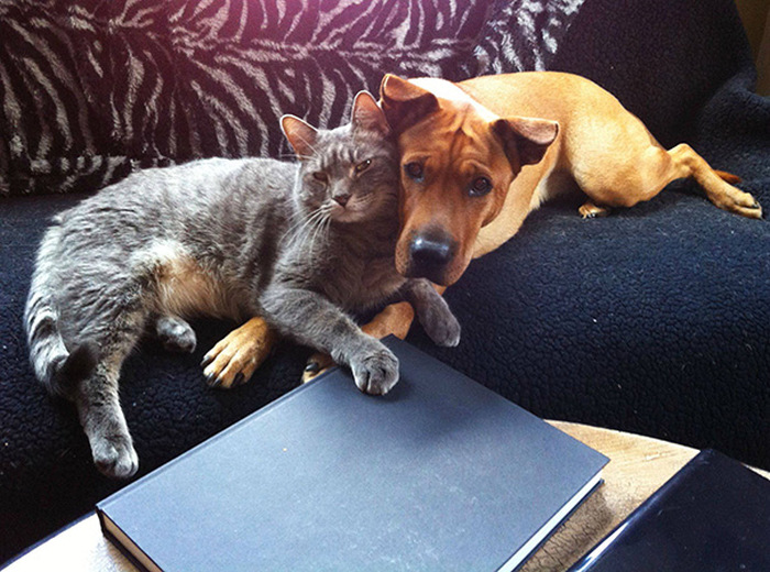 Cats And Dogs (35 pics)