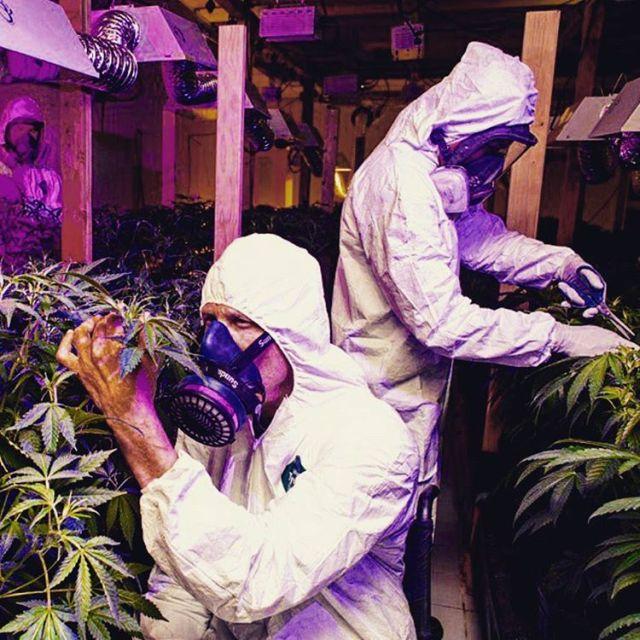 Big Mike Is The Multi-Millionaire Legal Marijuana Entrepreneur (21 pics)