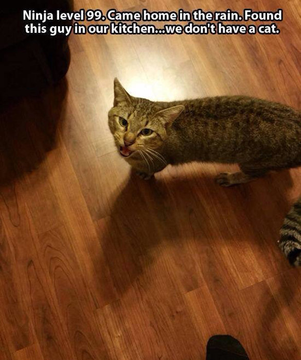 Not My Cat Meme (17 pics)