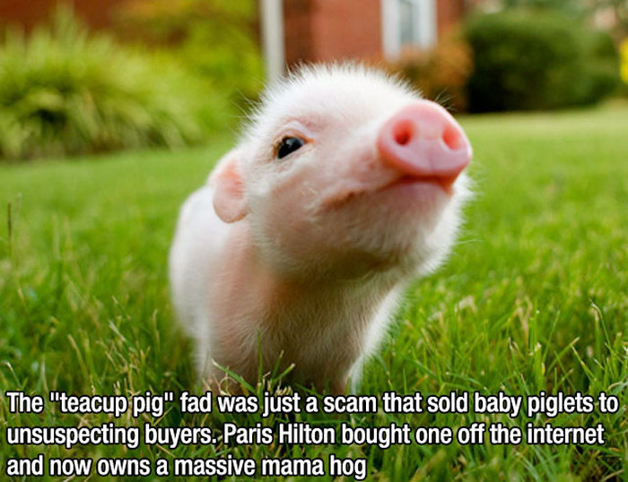 Interesting Facts (15 pics)