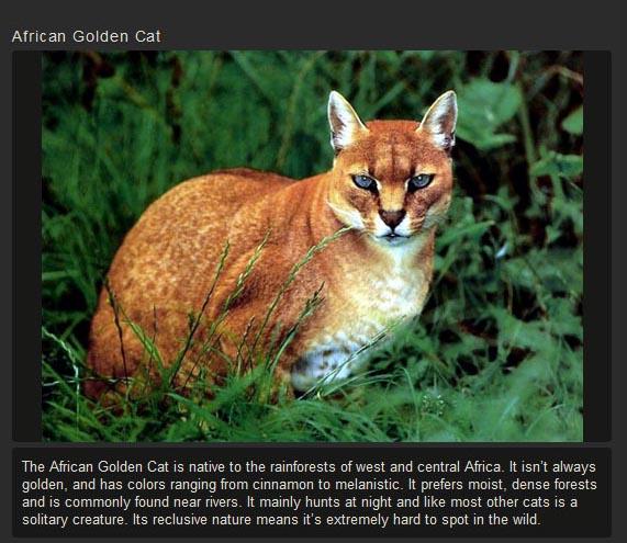 Unusual Cat Species (15 pics)