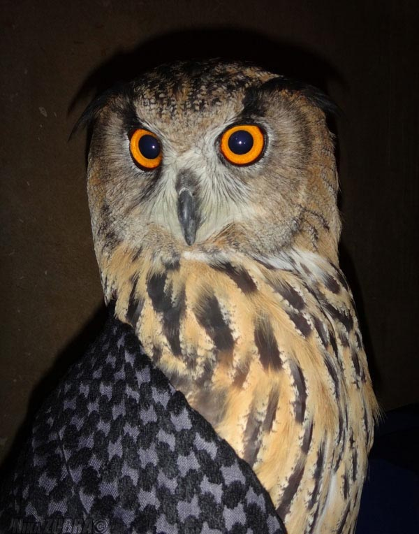 Owl Is Making Faces (6 pics)