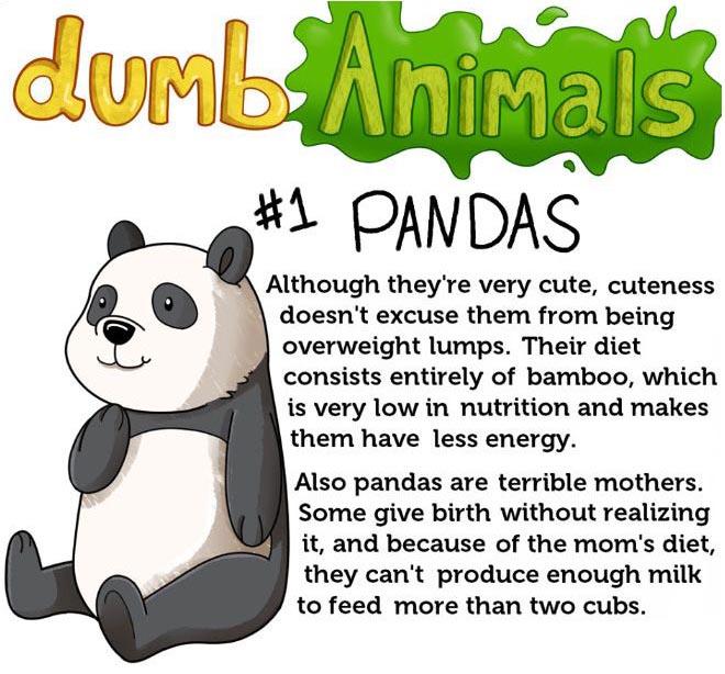 Dumb Animals (4 pics)